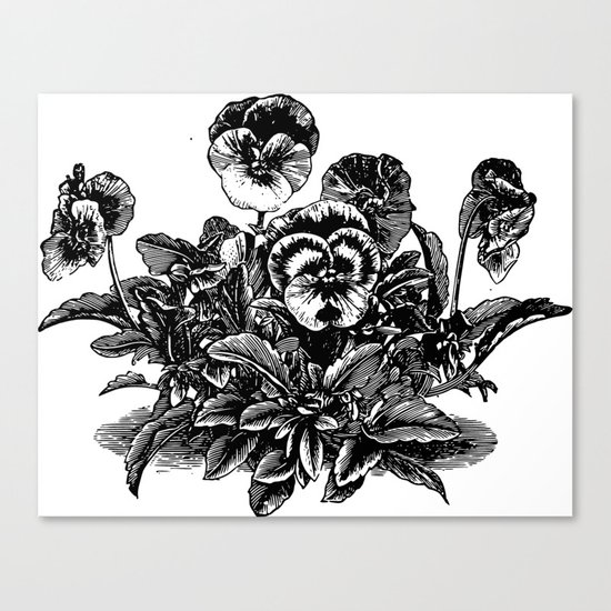 Sweet Violet Canvas Print