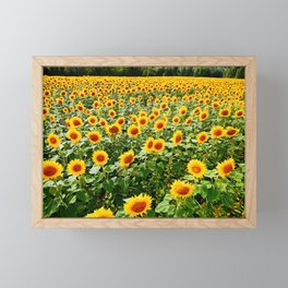 Field of Sunny Flowers Framed Mini Art Print