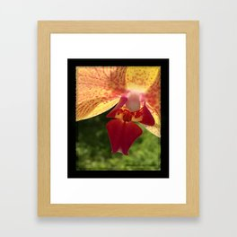 Yellow Orchid Flower Blossom from Mexico Framed Art Print