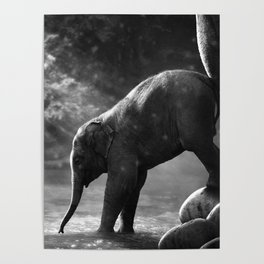 Baby elephant with mother Poster