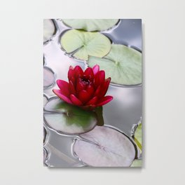Dark Red Water Lily Metal Print