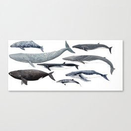 Whales and right whale Canvas Print