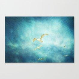 brighton seagulls Canvas Print