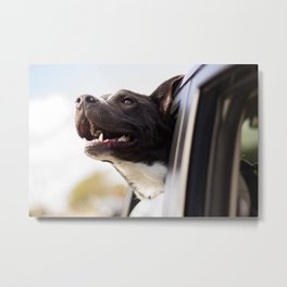 Canine 11 Metal Print