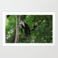 Costa Rican Monkeys in the Wild Relaxing Art Print