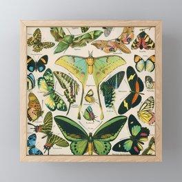 Vintage Butterfly Print Framed Mini Art Print