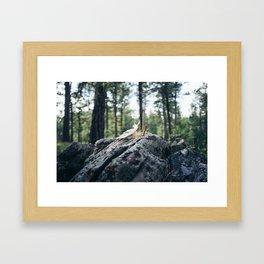 Blackhills Framed Art Print
