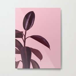 Burgundy Rubber Plant Metal Print