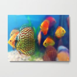 Love is a Fish Metal Print