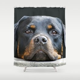 Amazing Rottweiler Chubby Adorable Dog - rottweiler-dog1100989-shower-curtains  Trends_61850  .jpg
