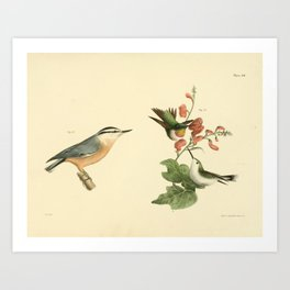 040 Red throated Hummingbird male and female (Trochilus colubris) Red bellied Nuthatch (Sitta canadensis)13 Art Print