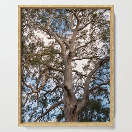 Scribbly Gum Tree Serving Tray