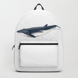 Bryde´s baby whale (Balaenoptera brydei) Backpack