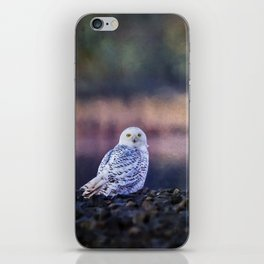 Snowy Owl squared iPhone Skin