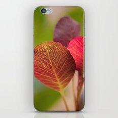 The Sugar Plum Tree iPhone & iPod Skin