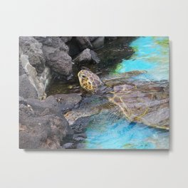 Sea Turtle at Sea Life Park, Hawaii Metal Print