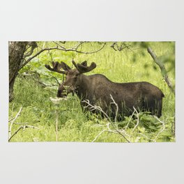 Bull Moose in Kincaid Park Rug