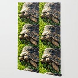 Wild Tortoise In Grass Meadow Wallpaper