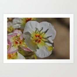 Smallest Desert Wildflower Blossoms by Reay of Light Photography Art Print