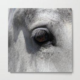 Horse Eye   Animal Photography Metal Print