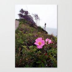 Pink Wild Rose, Gravels Park, Newfoundland Canvas Print