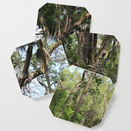 Hiking in Florida Coaster