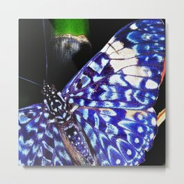 Butterfly Close-Up on Bamboo in Costa Rica Metal Print
