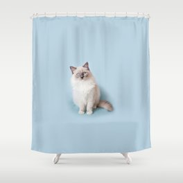 Blue eyed Ragdoll kitty sitting Shower Curtain