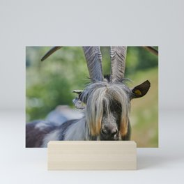 Goat Mini Art Print