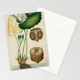 Flower nymphe lothos (Fr)13 Stationery Cards
