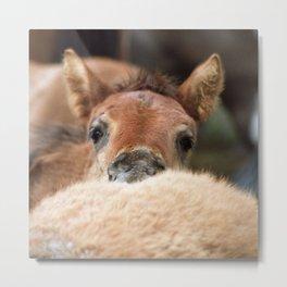 Fluffy pony Metal Print
