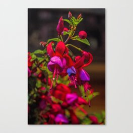 Fuchsia Dreams Canvas Print