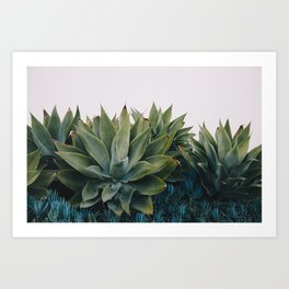 California Flora Art Print