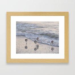 Sandpipers  Framed Art Print