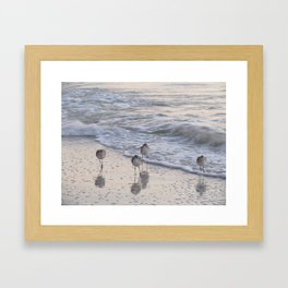 Sandpipers  Framed Art Print