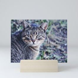 tabby Mini Art Print