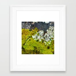 Tree Bark with Lichen#8 Framed Art Print