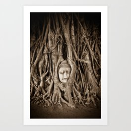 Buddha head in a Banyan Tree in Ayutthaya, Thailand Art Print