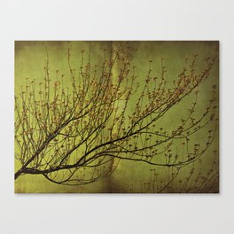 A Heart of Gold Canvas Print