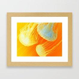 Jellyfish of the Orange Marmalade Hoodie Framed Art Print