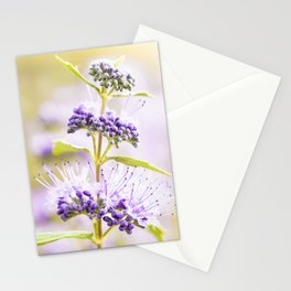 Russian Sage Stationery Cards