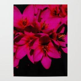 pink flowes Poster