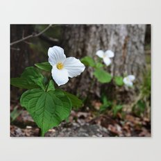 Trilliums  Canvas Print