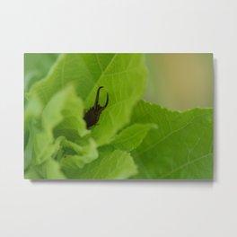 pincher bug Metal Print
