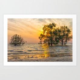 Sunrise over mangrove trees Art Print