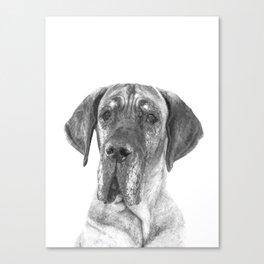 Black and White Great Dane Canvas Print