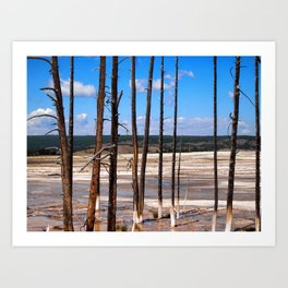 Dead Trees standing in mineral hot springs Art Print