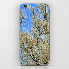 Ice Tree iPhone & iPod Skin