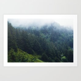 Oregon forest, foggy forest, oregon coast, green forest, nature, moody forest, moody landscape Art Print
