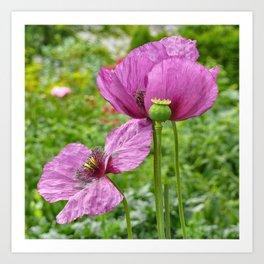 Purple poppies art prints society6 mightylinksfo